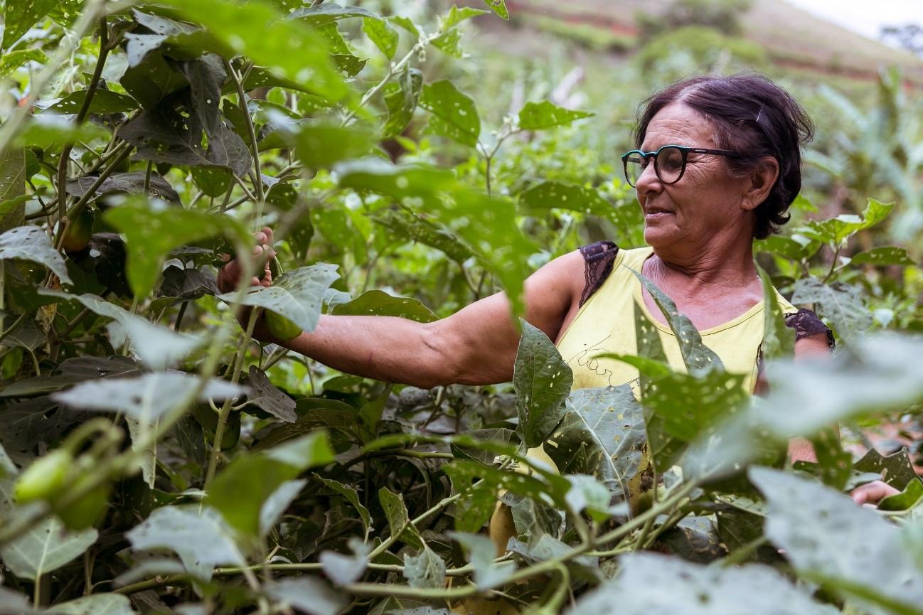 Produtores rurais colocam em prática tecnologias agropecuárias sustentáveis no vale do Rio Doce