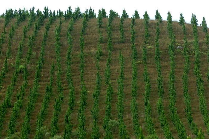 Plantar florestas para estimular o crescimento