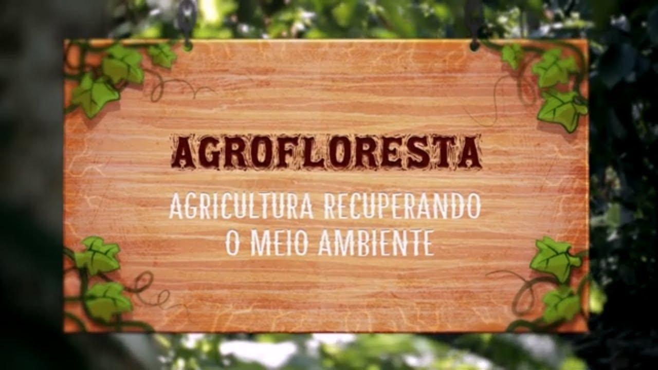 Agrofloresta – Agricultura recuperando o meio ambiente