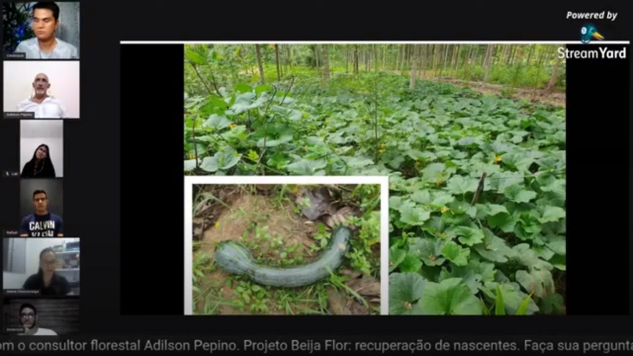 Live – Projeto Beija Flor/Debate Florestal
