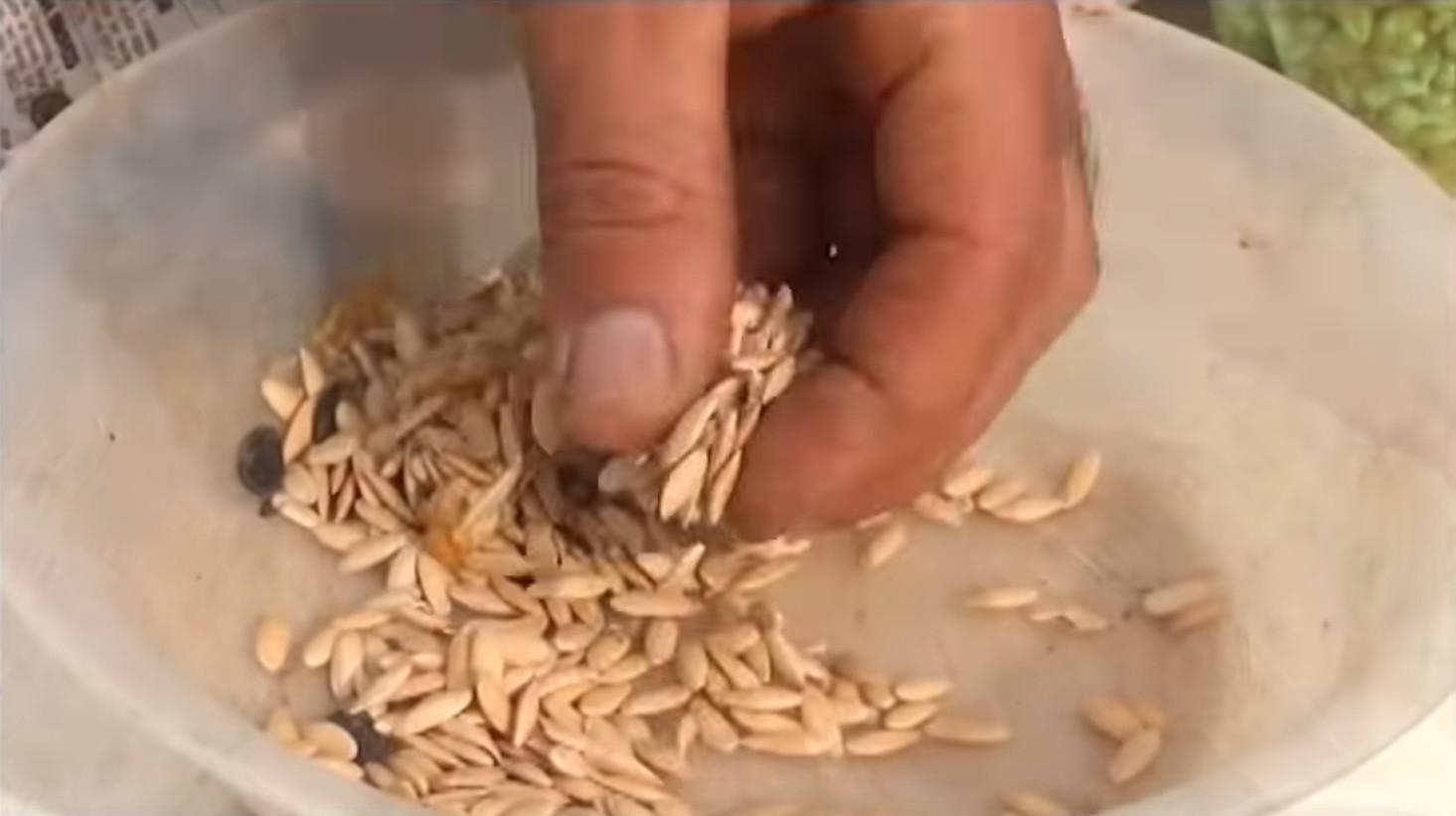 Sementes crioulas – Cultivando a biodiversidade para as gerações futuras