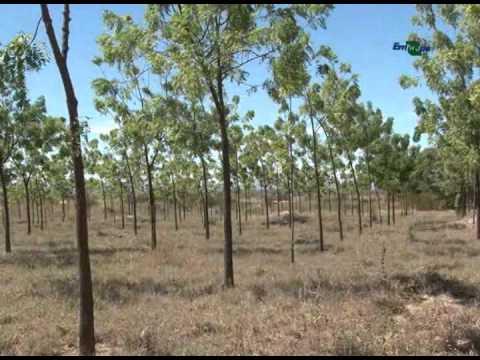 Experiências bem-sucedidas de sistemas agroflorestais (SAF)
