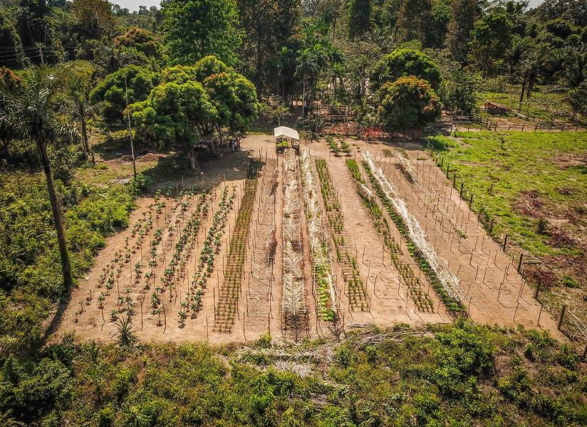 A ciência mostra as vantagens da agrofloresta e dos plantios mistos para a restauração