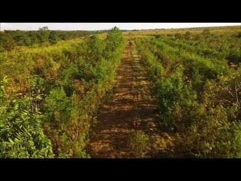 Agrofloresta gera lucro para proprietário rural